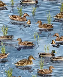 Nature-C6406-Pond